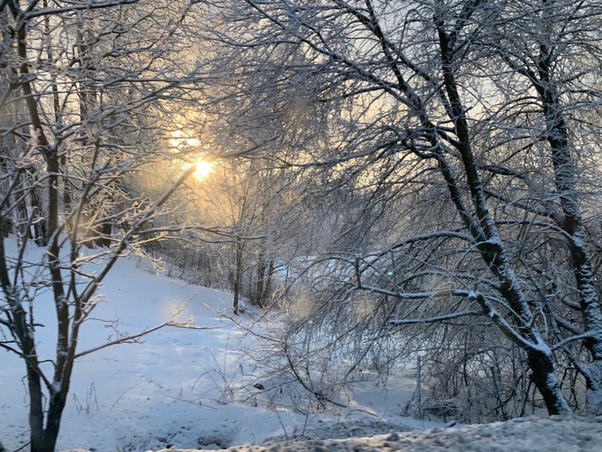 Waldansicht mit Schnee